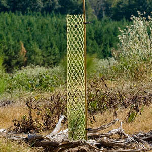 "4"" x 36"", Rigid Seedling Protector Tubes, pk. of 250"