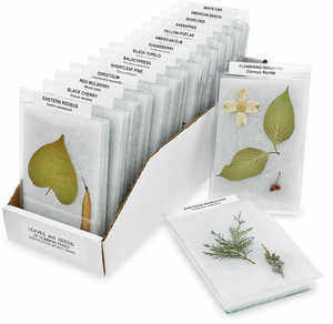 Leaves and Seeds of Common Trees Identification Mounts Series